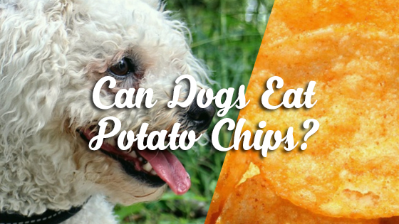 Can Dogs Eat Sweet Potato Pie