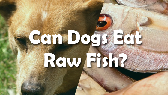 Can dogs eat raw fish pet consider for Raw fish for dogs