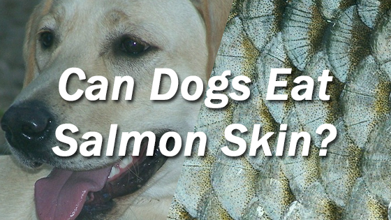 Can i give my dog salmon skin pet consider for Can i give my dog fish oil for humans