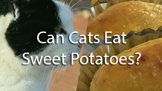 Can You Eat Raw Potato Cakes