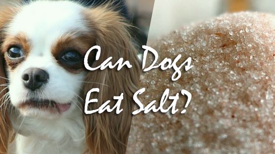 can dogs have salt