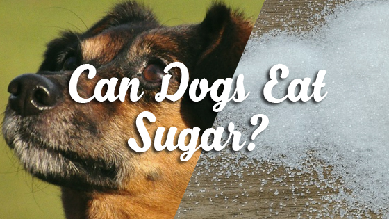 Can Dogs Eat Sugar Pet Consider