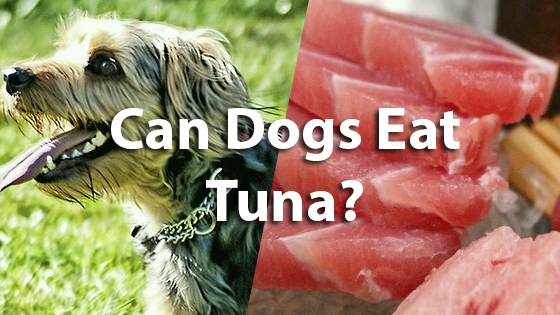 Pet consider online pet authority for Is tuna fish good for dogs