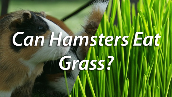 Can Hamsters Eat Dog Kibble